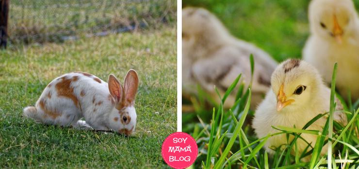 Conejos y pollitos no son regalos de Pascuas