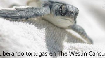 Liberando tortugas en The Westin Cancun
